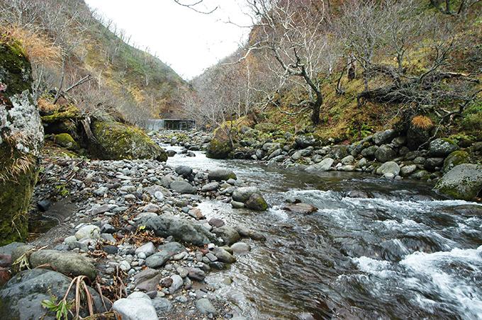 大きな治山ダムである。