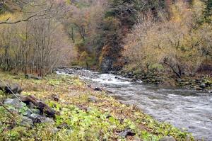 上流にもう一つの治山ダムがあるために、川底が下がり、対岸の川岸の崩れが広がっている。