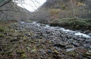 治山ダムに一杯に貯まった砂利の上を水が流れ、川岸を削り、川幅を広げていることが読み取れる。川岸が崩れ、ここから泥が流れ出すことになる。
