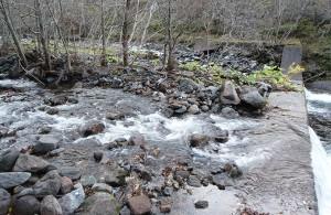 砂利で一杯になった治山ダムの上流側を水は自由に流れることになるから、こうした分流もできる。そして、砂利が流れ出さないから、樹林化する。