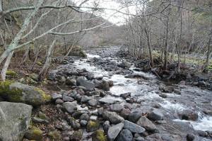 治山ダムに貯まった砂利の上を水は蛇行して流れ、新たに川岸を削る。こうしたところからも泥が流れ出すようになる。ダムの下流でも、上流でも川岸が崩れることになる。