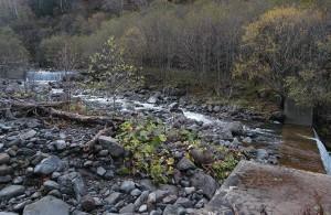 この治山ダムは砂利で満杯になっている。