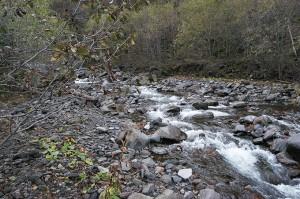 増水時にはこの治山ダムの堆砂域に流れが広がり、左右両岸の川岸を浸食する。浸食された証拠が、崖のようになった川岸の姿だ。