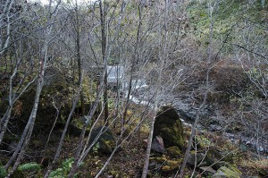 さらに上流に治山ダムがあった。このあたり、林道は土砂で埋まっており、山登りして越える。ヒグマが出てきたら鉢合わせになりそうだ。