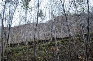 林道を護る鋼鉄製の土砂の防護柵。土砂で壊れ、林道も埋まっていた。