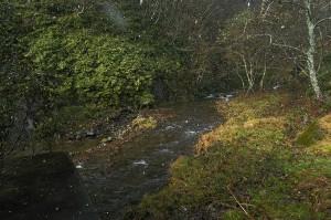 治山ダムの堆砂域。土砂が頻繁に流れ出すような状況は見られない。治山ダムが無ければ無いなりに、安定した谷川になっているだろう。