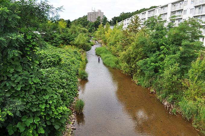 札幌の都市圏にありながら、樹林に囲まれた川が残されているが、たくさんの落差工が安定した川を壊す。いつまでこの風景が残っているだろうか…