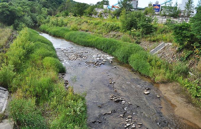 常磐一号橋から上流を見る。水際まで草が密生していたのだが…