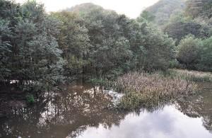 2010-10-10・加工済・ポンセイヨウベツ川・DSC_0180