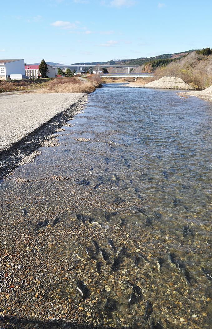 2010-11-23・加工済・茂辺地川・DSC_0027