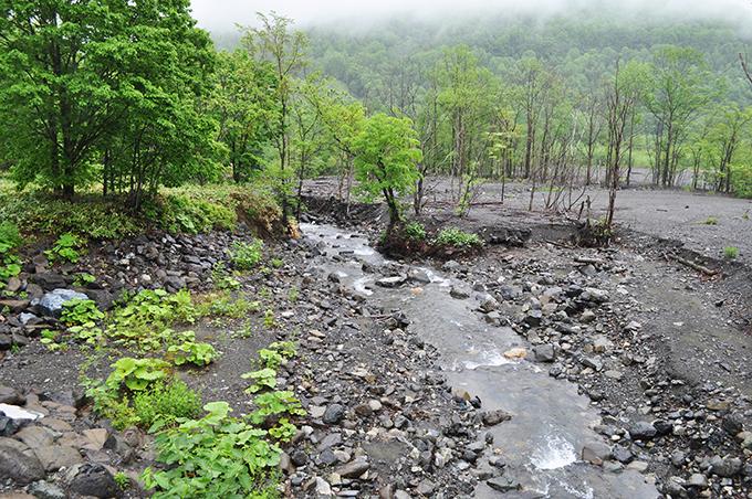 橋の下流側。チロロ川を流れてきた砂利がパンケユクトラシナイ川の合流点に大量に堆積していた。