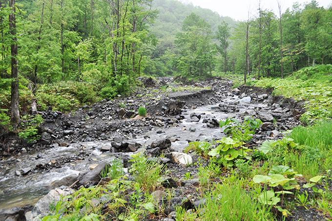 川岸は垂直の段差ができている。この姿は河床低下の特徴である。