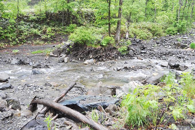 河床低下によって砂利が抜き取られるように流れ出すので、川岸の樹林の根っこがむき出しにされる。しかし、河川管理者や砂防学者らは増水のよって横洗掘されたと説明するから、みなさんもこうした説明を聞いたときにはしっかりと記憶しておいていただきたい。