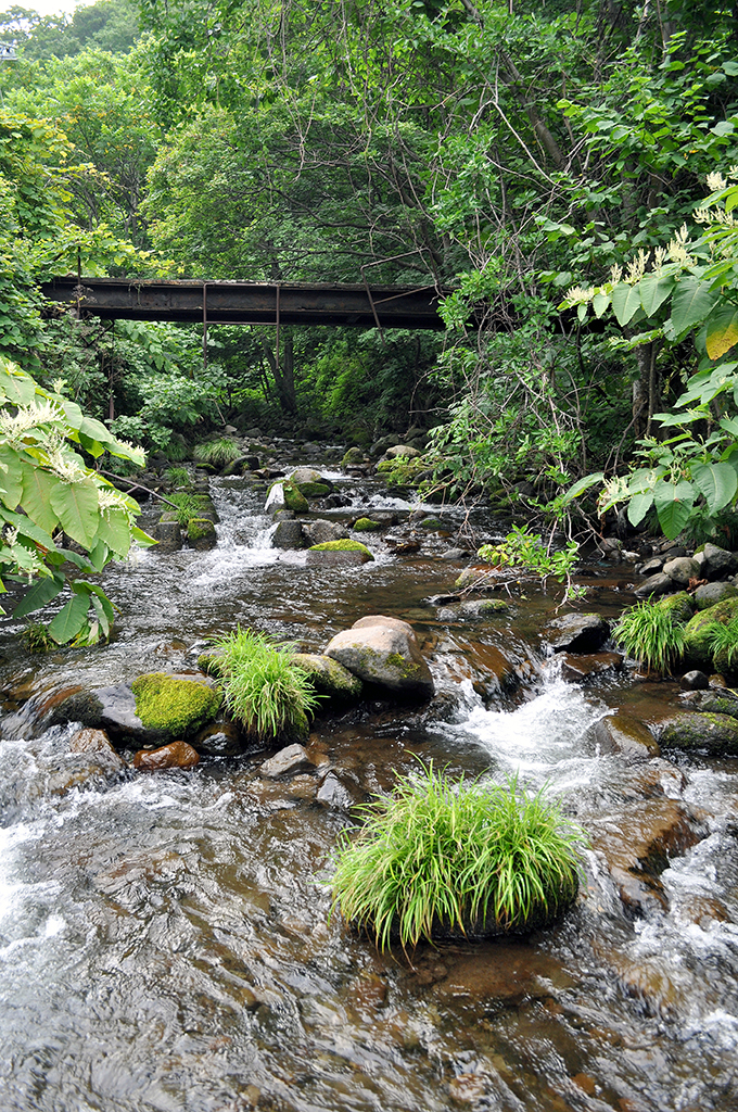 苔むした石。安定した川の証。こうした川を清流と呼ぶのだ。水質だけの判断は誤りだ。