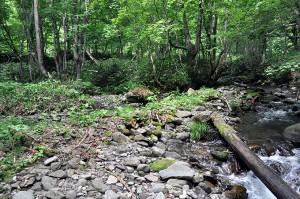 川岸と川底の落差は小さいので、増水すれば氾濫原に水が溢れ出し、巨石や流木は氾濫原の樹林に補足されてしまう。