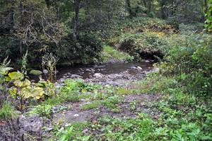 川底が下がっていないので、川岸はなだらかだ。だから、車で川を渡ることができる。