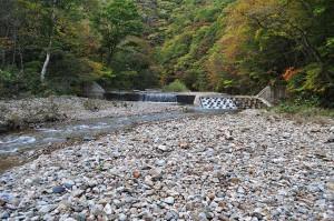 2011-10-16・加工済・八木川・DSC_0157