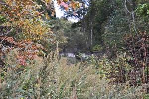 小さな小沢に治山ダムがたくさん建設されている。本当に必要なのか、審査すべきと思うのだが…