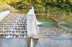 2011-10-16・加工済・八木川・DSC_0958