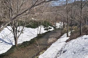 樹林化した堆砂域に支流が流れ込んでいる。