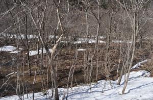 砂防ダムの堆砂域は樹林化している。