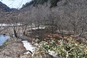 川の上流が、まるで下流域の湿原のような風景になっている。