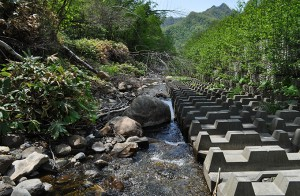 2012-05-24・加工済・沙流川水系中の沢川・DSC_0548