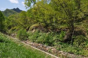 2012-05-24・加工済・沙流川水系中の沢川・DSC_0587