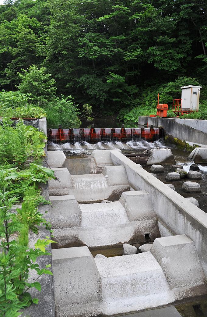 2012-07-03・加工済・小鶉川・頭首工魚道・DSC_0424