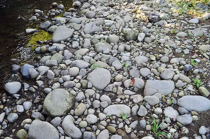 増水後の川には大量の微細な砂やシルトが堆積する。これでは魚は繁殖できない。