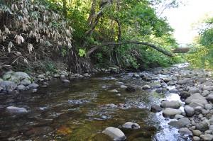川岸が砂山崩しのように崩れ、河畔林は根っこがむき出しになり、倒れ込んでいく。