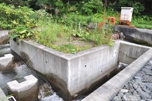 2012-08-23・加工済・小鶉川頭首工・コの字型魚道・DSC_0066