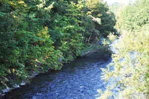 見た目にはよく見える川だが…左岸を注意してみると…