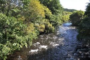 河畔林が川面を覆っている。野生の川といえよう。だが、これからじわり上流の治山ダムの影響が目に見えるようになってくるだろう。