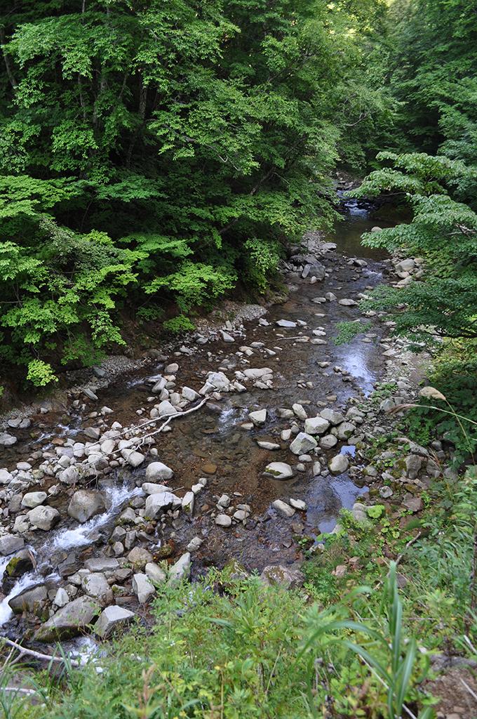 2012-09-08・加工済・見市川支流二股川・DSC_0272