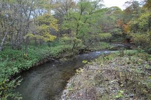 久著呂川の上流は流域の開墾によって増水量が増したのだろうか、川岸崩壊が見られる。しかし、川の石を見ていただきたい。多様な粒径の石があり、微細な砂やシルトは少ない。