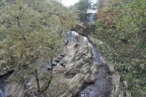 2013-10-15・加工済・久著呂川・DSC_0152