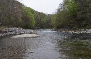 新スリットダムの下流。川の砂利の大きさを見てほしい。巨石がごろごろしていなければならない川なのに、巨石がきわめて少ない。異常な状態にあることを河川の専門家らは見落としている。