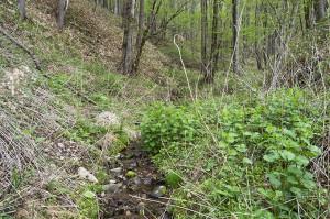 川の周りは木が多いので、山の斜面も木の根っこによってしっかりと抑えられている。