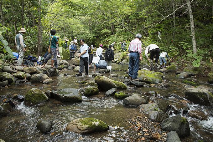 上流では苔むした石が多く見られた。