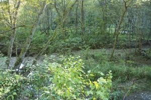 2014-09-20・加工済・茂辺地川・樹林化した堆砂域・KAZ_0078