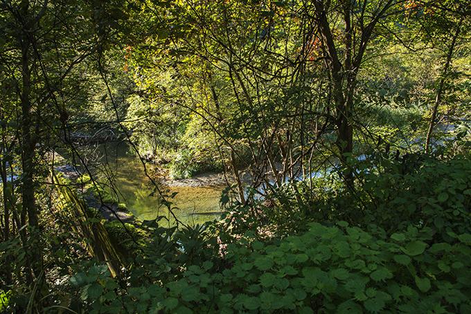 2014-09-20・加工済・茂辺地川・砂防ダム・樹林化した堆砂域・KAZ_0082