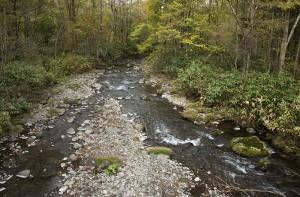 橋から下流を見る。苔むした石が多く見られる。