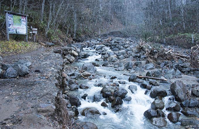 苔むした石の多かった空沼岳登山道入口でも道路が流されていた。