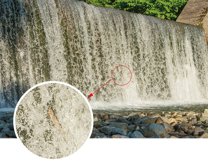 2015-07-06・臼別川・砂防ダム・アメマスがジャン
