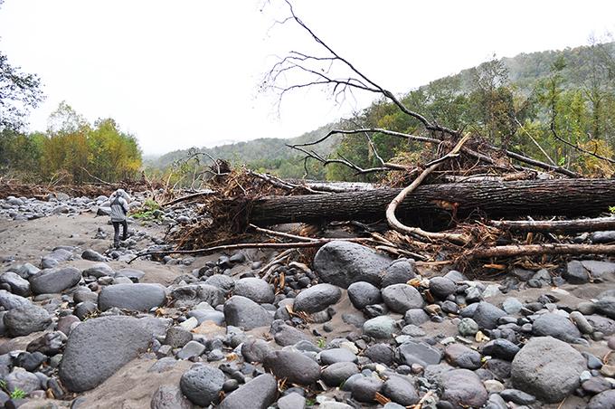 根がついたままの巨木が河原に散乱していた。