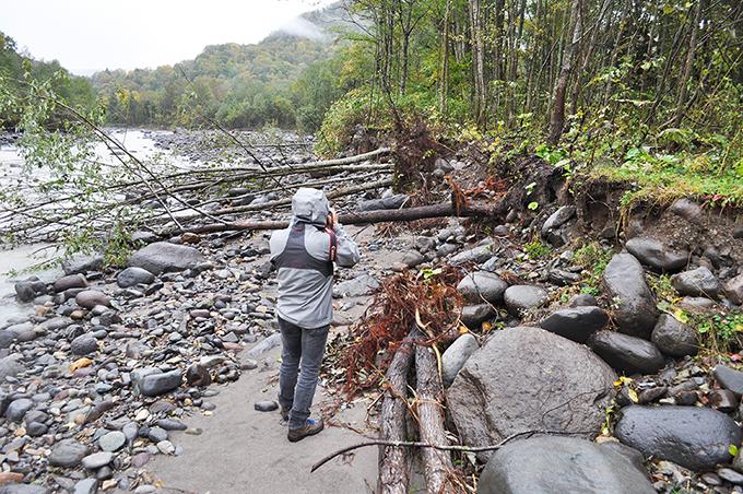 川岸が崩れ、立木は倒れ込んでいた。根がついたままの流木の多くは山が崩れて、そこから流木が流れてきたと河川管理者や専門家らはいうけれど、実際には川岸や山の斜面にあった立木が流されているのが事実だ。