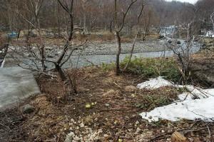 治山ダムはすでに砂利で一杯になっている。溜まっている石は小ぶりのものばかりである。そして、樹林化している。