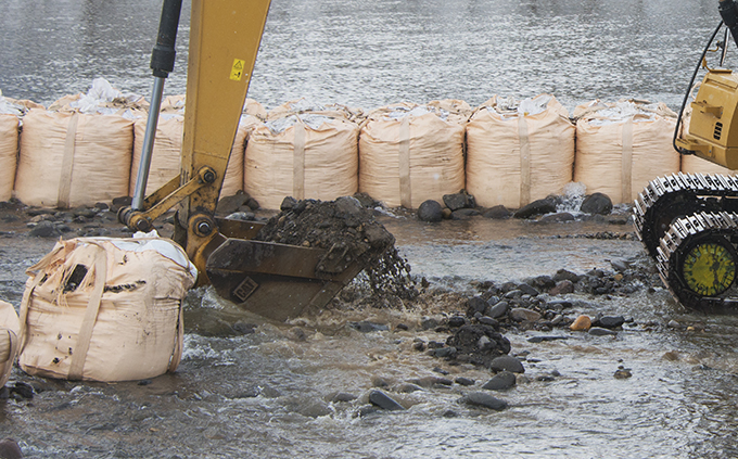 サケの産卵床を掘り起こしている。