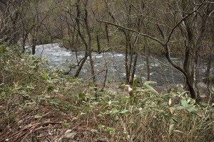 2015-04-21・加工済・見市川支流冷水川・KAZ_0146